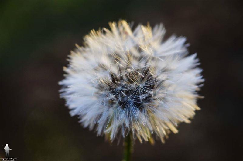 Good morning 🍃 macro macroflower igbest_macro macrophotography canon...