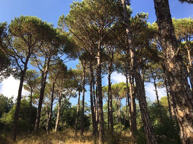 @taniahassan_ 😍😍😍 GreenLebanon LebanonViews BeautifulLebanon ... (Baakline, Mont-Liban, Lebanon)