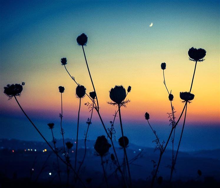 Just like magic . Lebanon sunset mountains flower silhouette nature ...