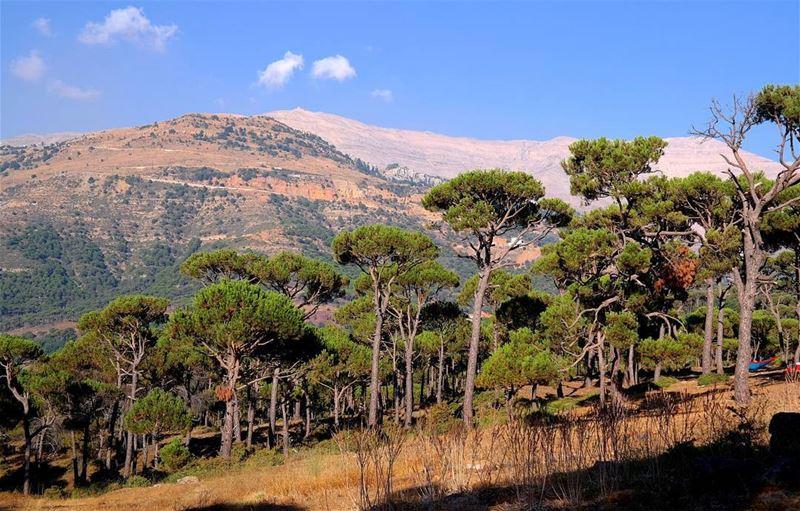 naturephotography baskinta bestofleb bestoflebanon lebanon_hdr ... (Baskinta, Lebanon)
