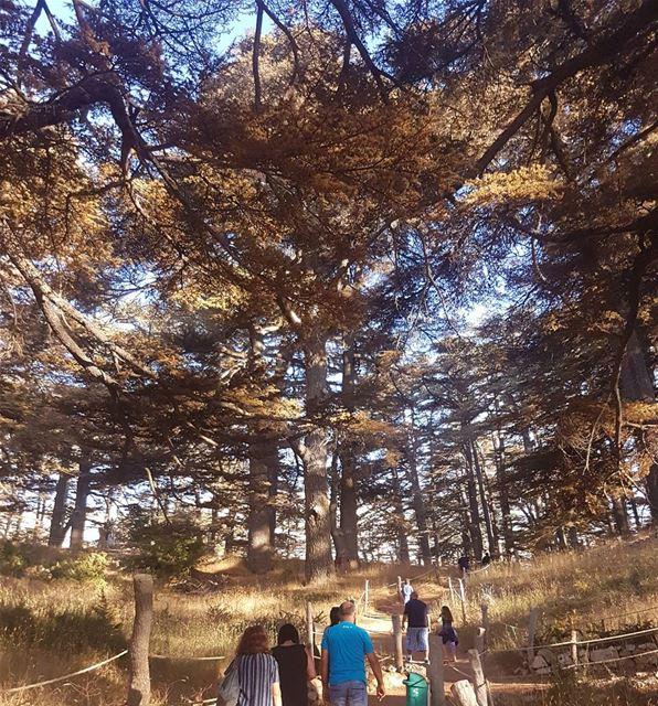 cedars lebanon walking forest ...