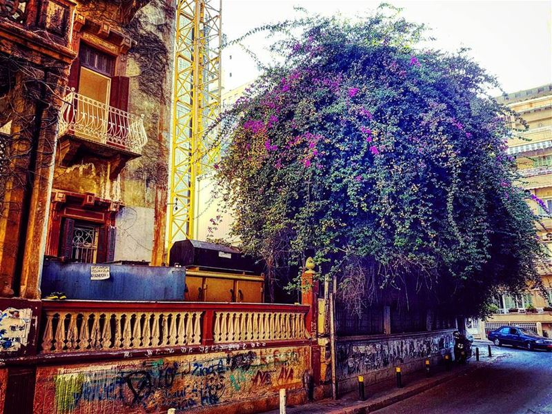 Unmanageable badhairday perfection scene latergram corner hamra ... (Beirut, Lebanon)