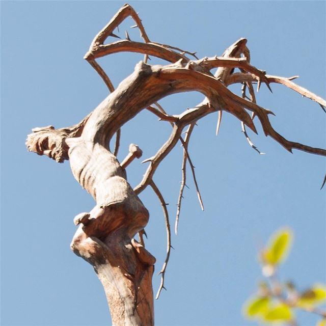 🇱🇧 Jesus esculpido nos galhos de um antigo cedro. Esta e outras obras... (Cedars of God)