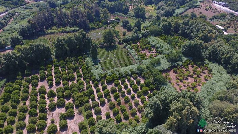 Zgharta orchards - north of Lebanon zgharta orchards northlebanon ...
