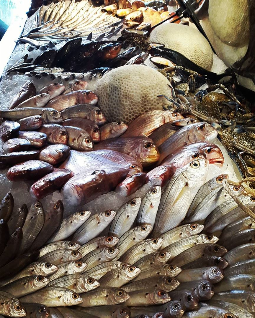 lunch seafood lebanon amchit livelovelebanon picoftheday ...