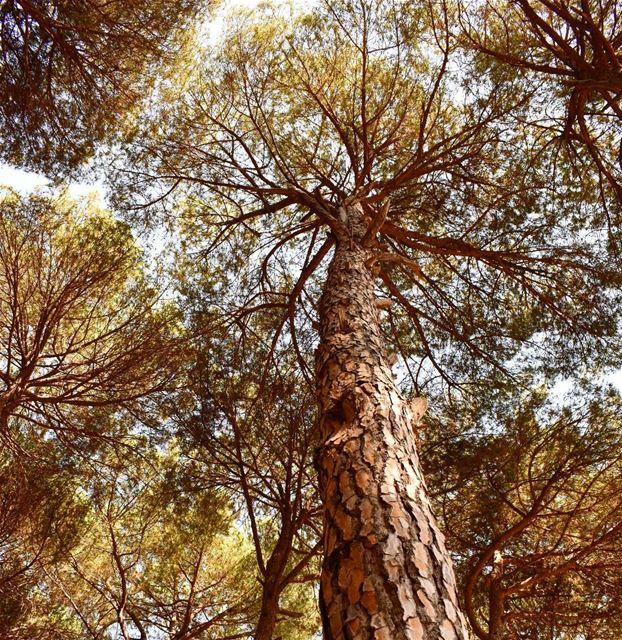 @mrouj SDL livelovelebanon lebanoninapicture lebanontraveler ...