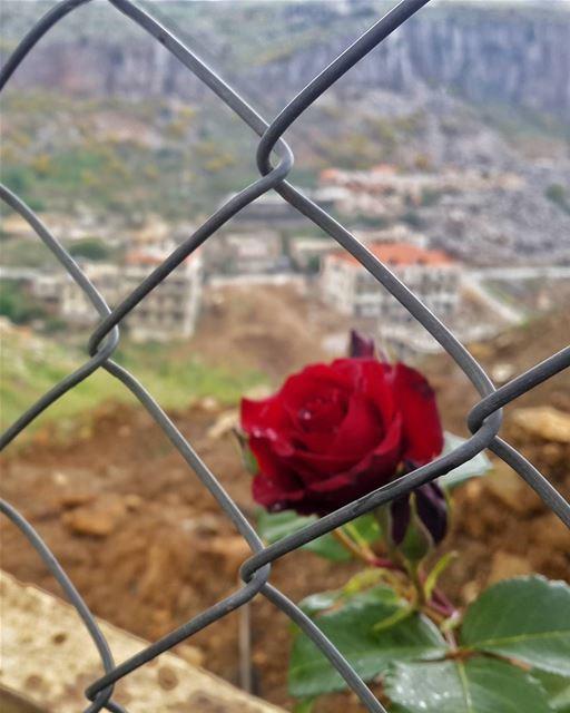 وينبت الله بين أحزانك ورداً..👌 📷 🍃 🌳 🌸 hasbaya lebanon ...