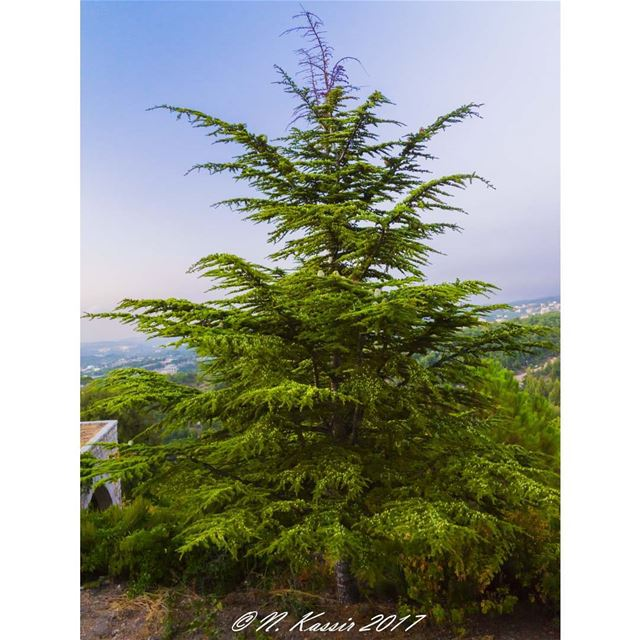 mountains cedar trees sky horizon ig_great_shots ... (Annâya, Mont-Liban, Lebanon)