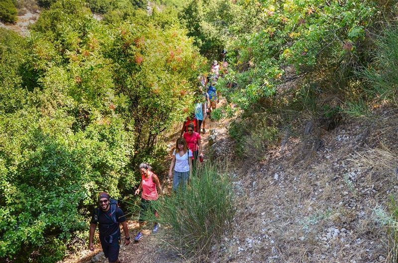 🌳Into the woods🌳a snap from our hike to Wadi el Salib. Public events are... (My Adventures Lebanon)