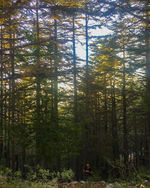 Can you spot the intruder in this Cedar forest ? 🌲 camplife ...
