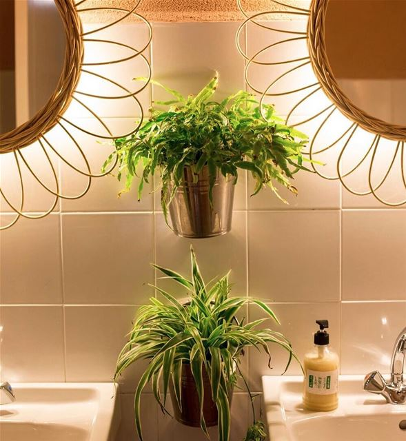 House plants, indirect lighting... these are part of what gives Beit El...