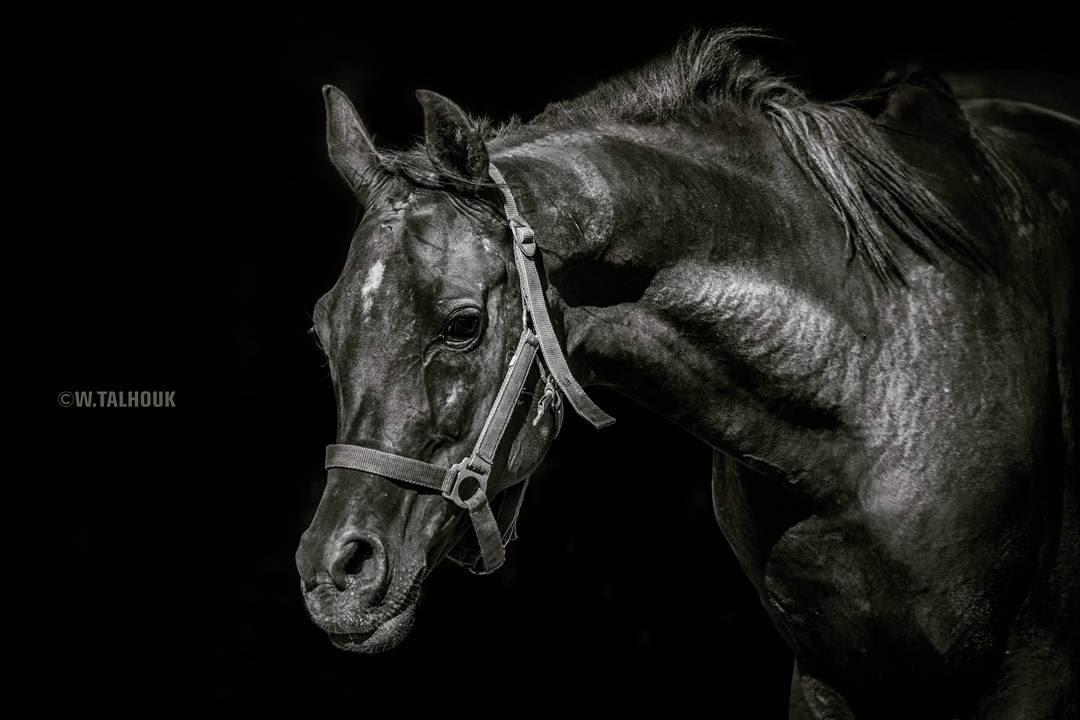 A horse is poetry in motion... horse horses arabianhorse arabian ...