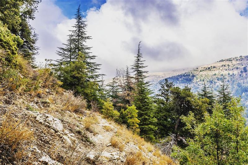 Ehden Reserve, Lebanon lebanon hiking nature outdoors livelovelebanon... (Horsh Ehden)