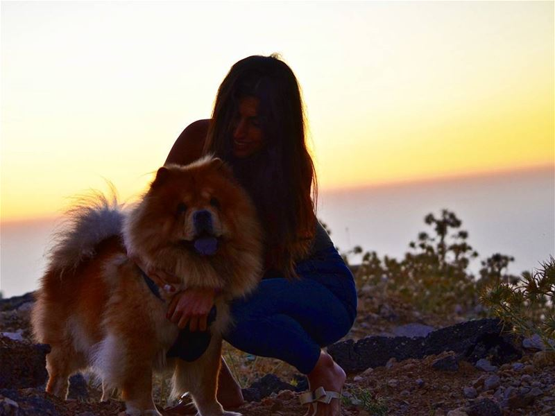 🤗🐶❤....... sunset  fluffy  dog  walk  lebanon  summer  outdoor ... (Zaarour Club)