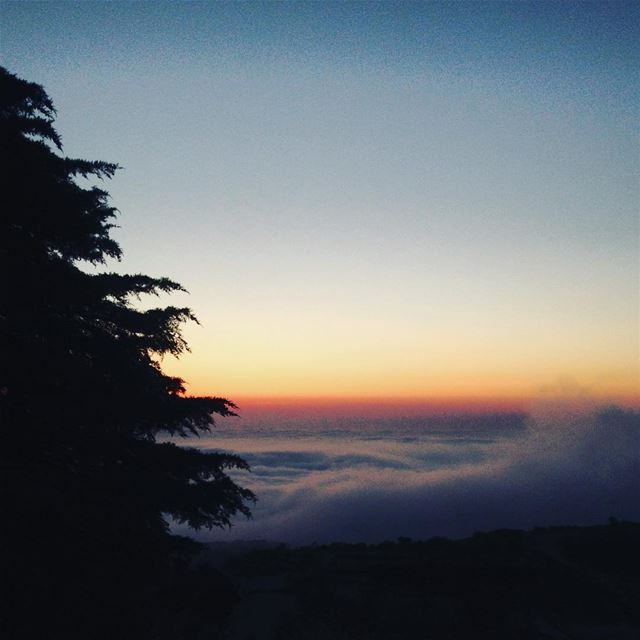 When the soul awakens. sunset mountains myst tree trees nature ... (Mount Lebanon)