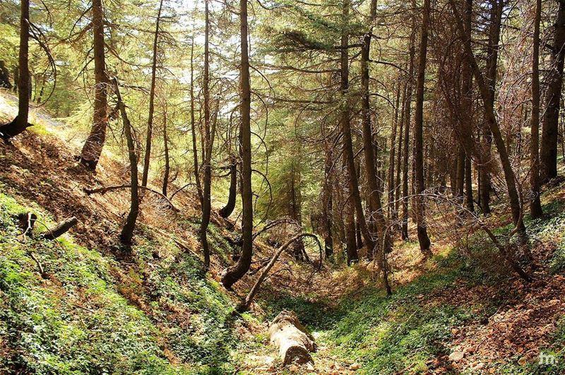 -Untouched Lebanon - ... lebanon insta_lebanon instalebanon ... (Al Shouf Cedar Nature Reserve)