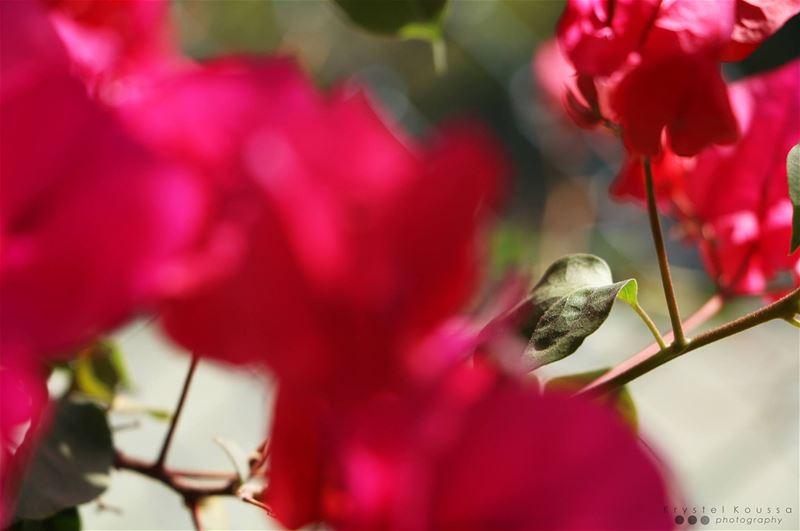 Nature & Close ups🌺🌿😍 nature closeups closeup macro macros bokeh ...