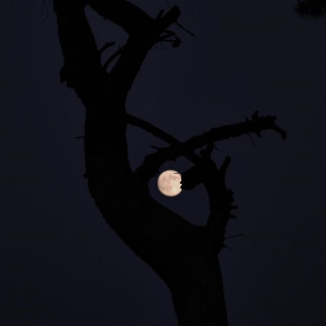 The night , the darkness , the tree and a beautiful moon for a better mood...