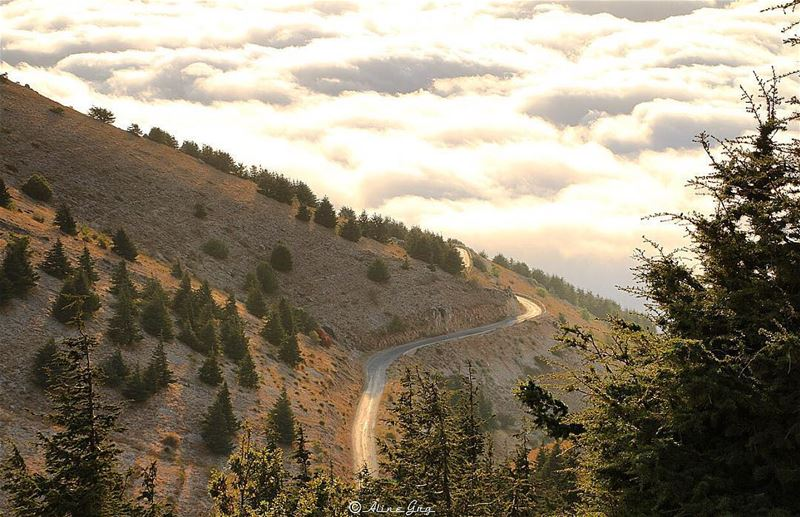 A Road to the Clouds ☁️🌲☁️ road clouds fog foggy heaven nature ... (Al Shouf Cedar Nature Reserve)
