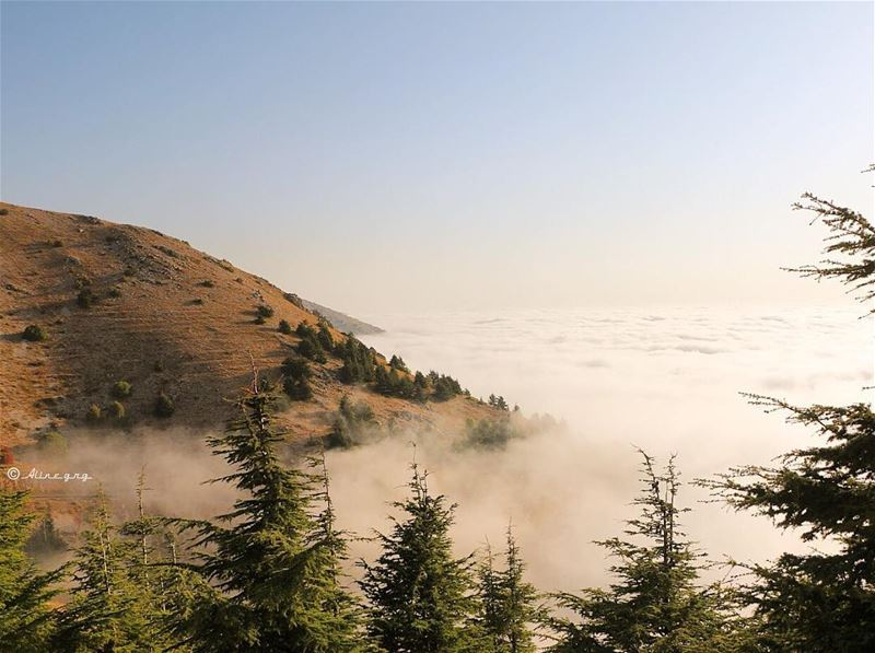 Foggy•Sunset 💛 sunset  mountain  outdoor  fog  cedars  chouf ... (Al Shouf Cedar Nature Reserve)