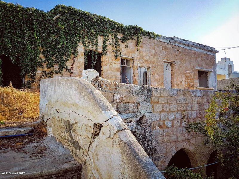 tb old lebanese house tyre city lebanon tree southlebanon ... (Soûr, Al Janub, Lebanon)