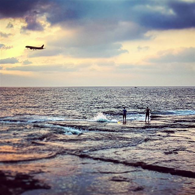 Casting golden eagle landing mediterranean light coastal landscape ... (Beirut, Lebanon)