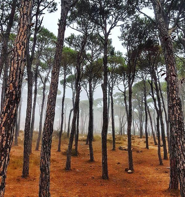 Morning mist in the woods woods morning trees fog naturephotography ... (Bois De-Boulogne, Mont-Liban, Lebanon)