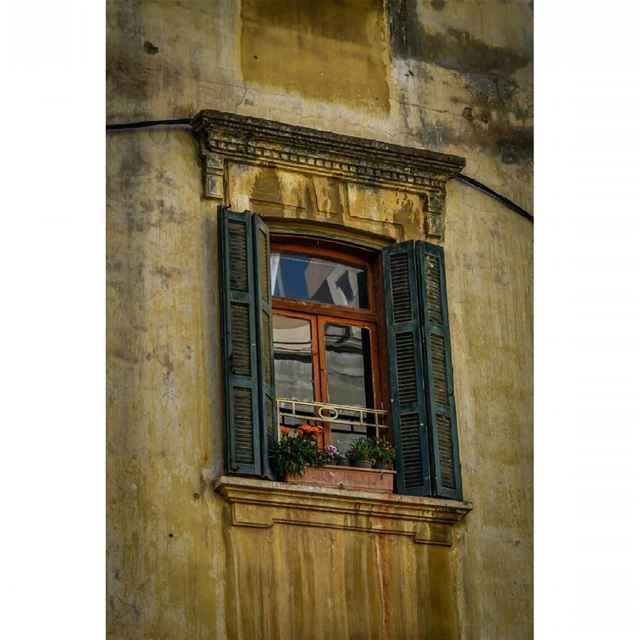 old buildings beirut lebanon architecture window plant flowers ...