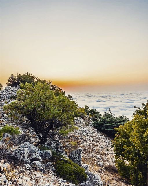 Maaser Chouf. Above the clouds. lebanon hiking nature outdoors ... (Al Shouf Cedar Nature Reserve)