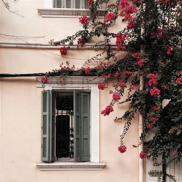 Waking up and reaching out for the flowers outside the window 🌺 Beirut... (Beirut, Lebanon)