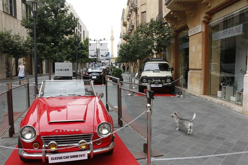 Where is my car? lebanese dogsofinstagram dog lookingfor vintage ... (Beirut Souks)