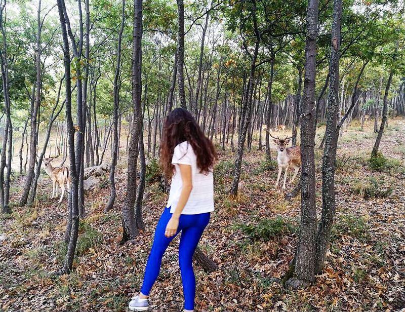 Run, deer, run! 🏃🏻🌲⠀⠀⠀⠀⠀⠀⠀⠀⠀⠀⠀⠀⠀⠀⠀⠀⠀⠀⠀⠀⠀⠀⠀⠀⠀⠀⠀⠀⠀⠀⠀⠀⠀⠀⠀⠀⠀⠀⠀⠀⠀⠀⠀⠀⠀⠀⠀⠀⠀⠀⠀