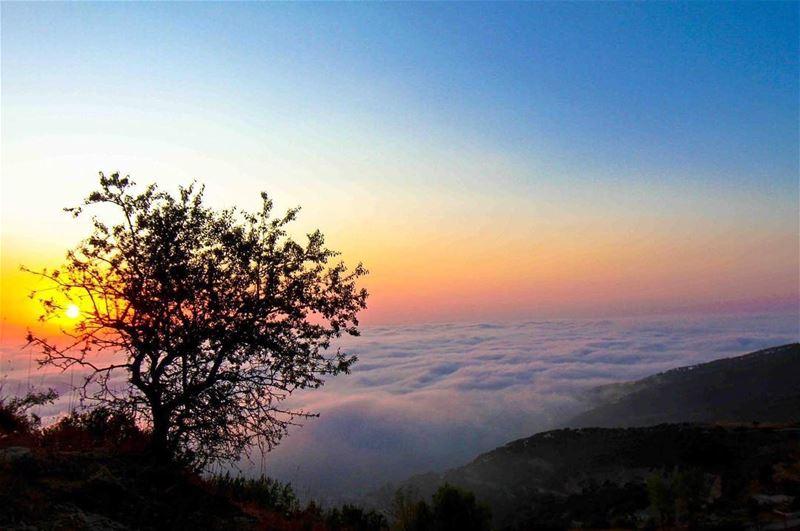 Wild sunsets ⛅️....... livelovefalougha livelovelebanon ... (Falougha, Mont-Liban, Lebanon)