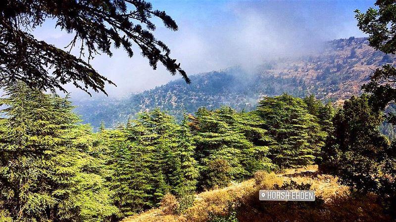Serenity 🍃... ehdenreserve landscape forest pine trees sky ... (Horsh Ehden)