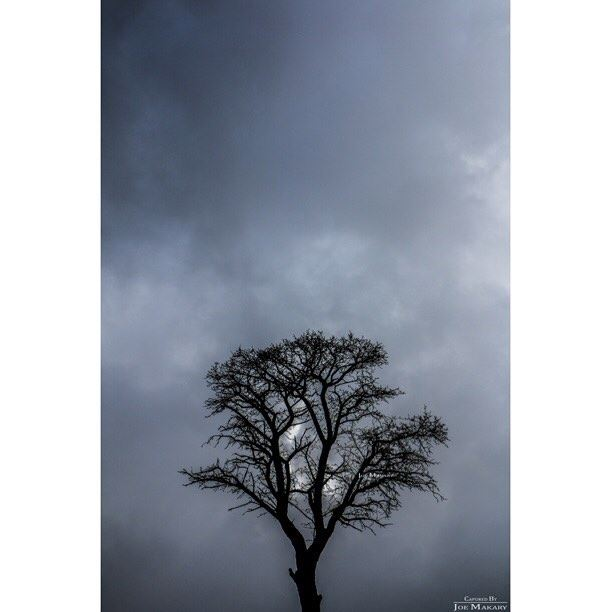 ehden tree fog clouds sillouette minimalism blackandwhitephoto ...
