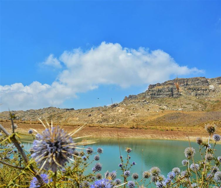 Cloudland☀️ nature GramTags light day sun mothernature flowers ... (El Laklouk, Mont-Liban, Lebanon)