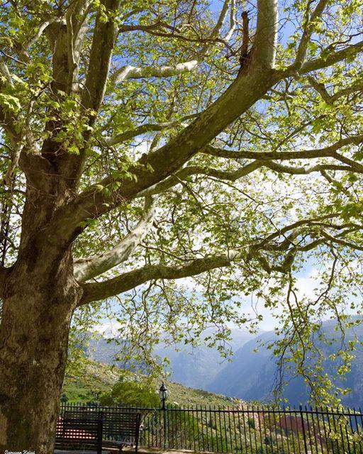 landscapephotography ehden lebanon nature visitlebanon tree mountains ...
