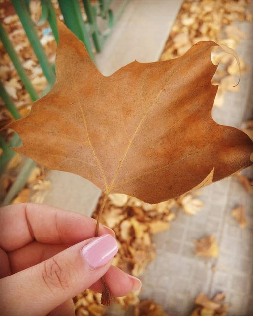 💫Every leaf speaks bliss to me, fluttering from the autumn tree 🍁... (Sawfar, Mont-Liban, Lebanon)