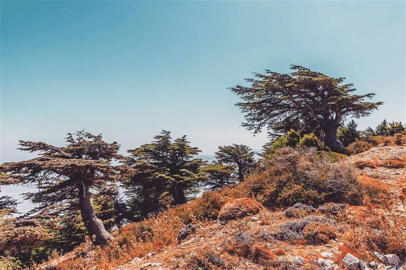 Jaba Oroba, Akkar,Lebanon lebanon hiking nature outdoors ... (Akar, Liban-Nord, Lebanon)