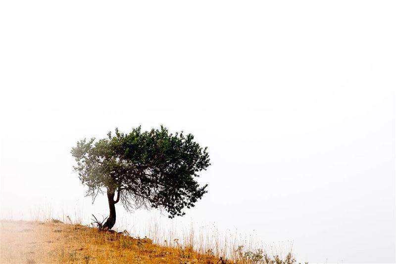© Rudy Aoun love artistic photography lebanon lebanese beirouthlife... (Qanat Bakish, Mont-Liban, Lebanon)