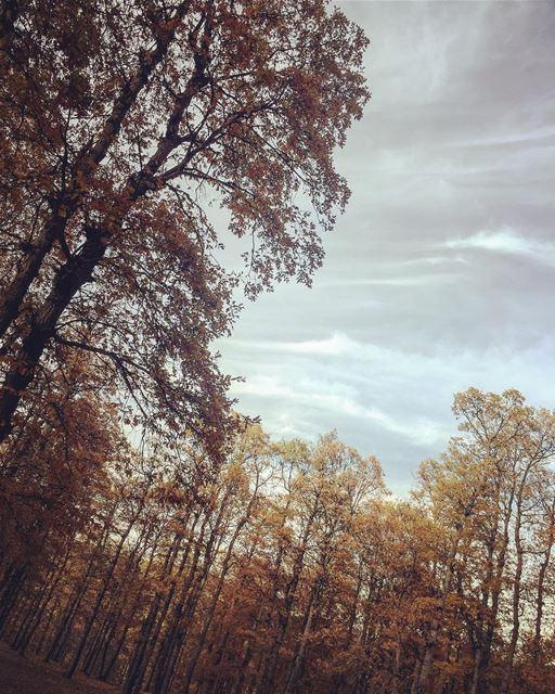 fall 🍂🍁 again & again.. instame season soft wind nature forest lebanon... (`Akkar, Liban-Nord, Lebanon)