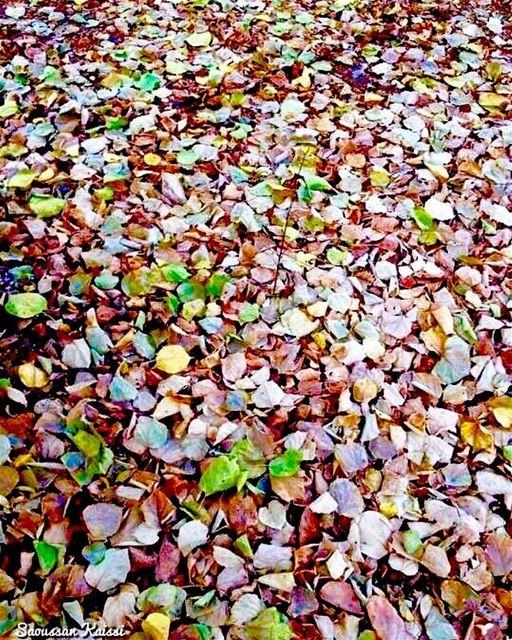 autumn autumnleaves colors my garden ...