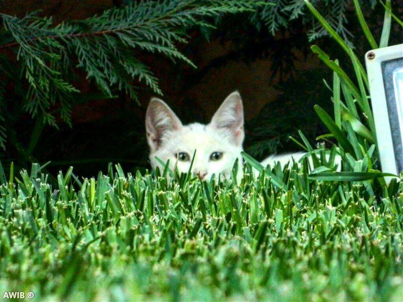 cat white noperson daylight travel tourism landscape ... (Beirut, Lebanon)