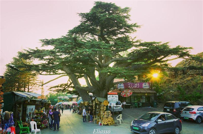 .–––––––––––––––––––––––––––––––––––Location: Alarz Bcharreh Lebanon– (Arz Bcharé)