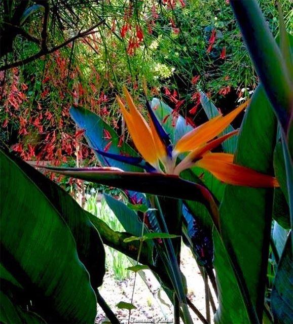 flowers colors my garden ...
