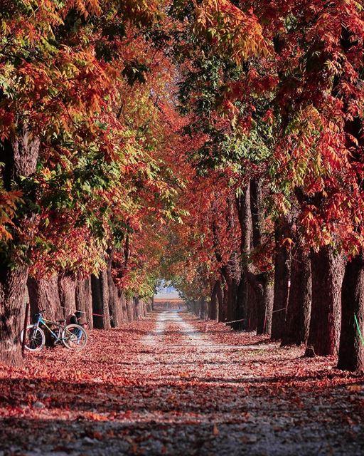 Começou o outono no Líbano e com ele surgem lindas paisagens como esta... (Deïr Taanâyel, Béqaa, Lebanon)