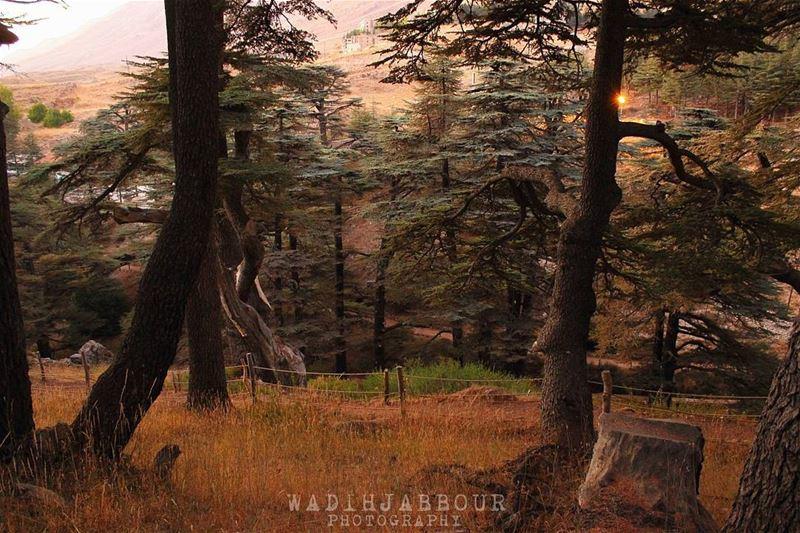 🔹🔹🔹🔹🔹 insta_lebanon igpowerclub Super_Lebanon ig_lebanon ... (Cedars of God)