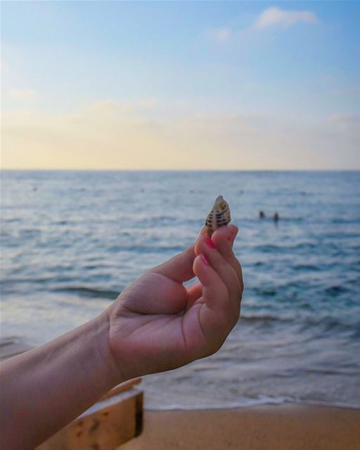 Can you really hear the ocean in a seashell ? 🌊🐚❤️... (Dar Alma)