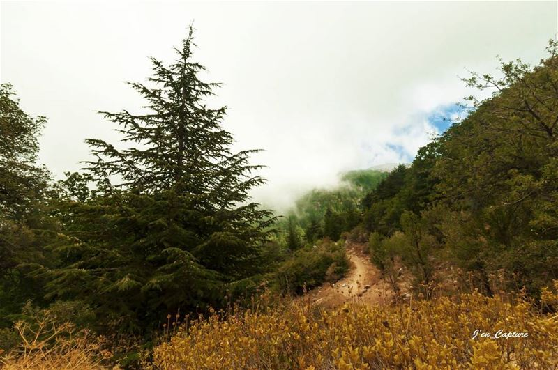 Saturday's walk... EhdenReserve••• HorshEhden Lebanon LiveloveEhden... (Horsh Ehden)