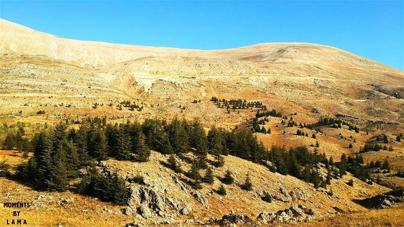 lebanesenature_ LAMA_YOUSSEF moments_by_lamayoussef 🌲 (The Cedars of Lebanon)